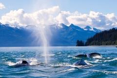 Whale-watching off the coast of Juneau, Alaska