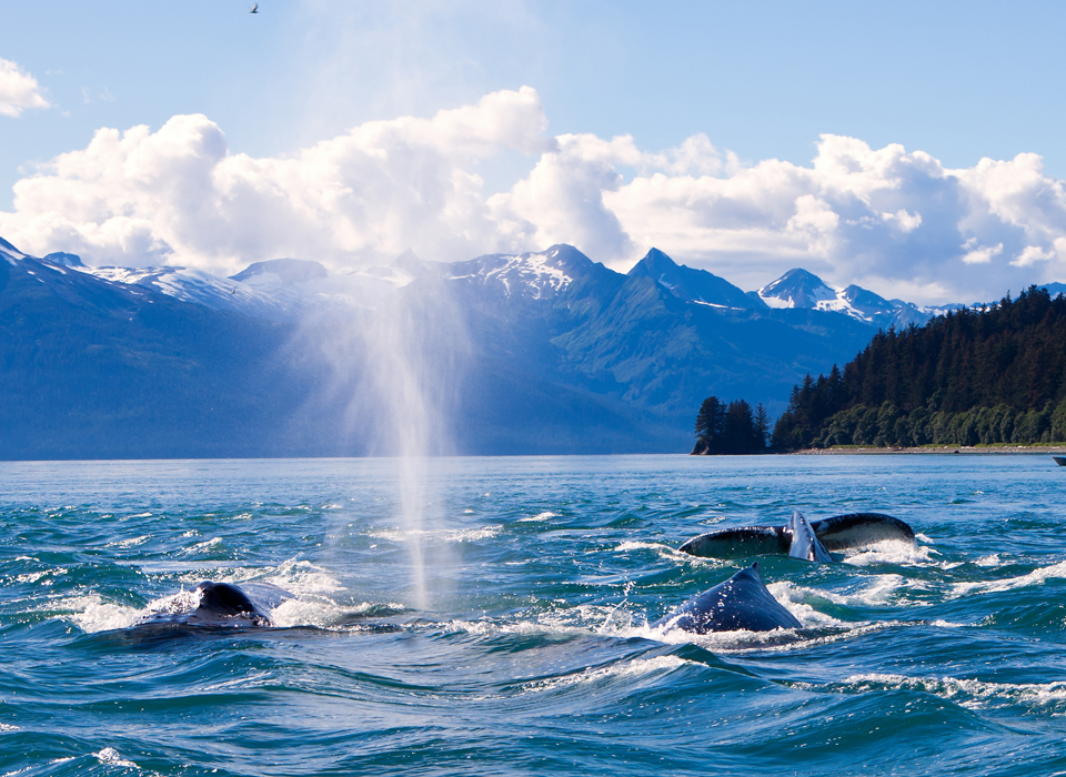 Whale-watching off the coast of Juneau, Alaska
