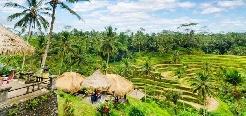 Bali's lush and beautiful natural landscape