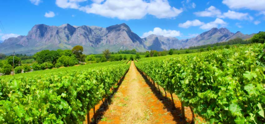 Best wine regions to visit on a cruise - Cape Town, South Africa