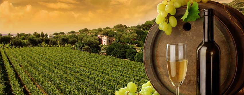 Best wine regions to visit on a cruise