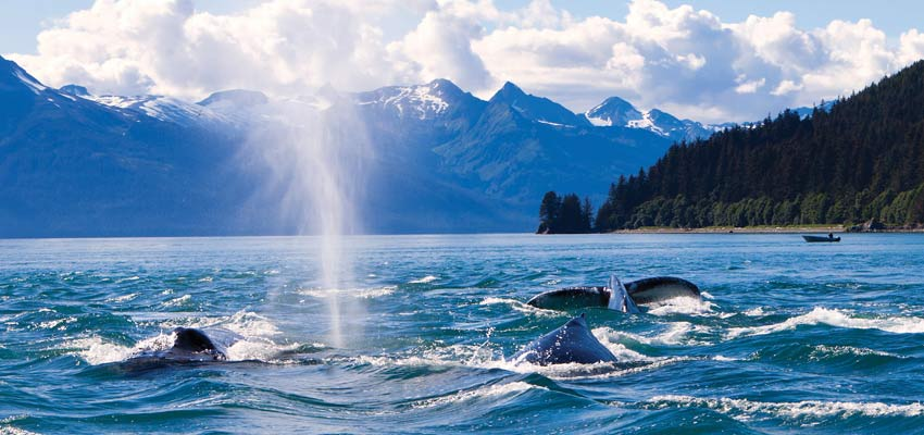 Whale-watching off the coast of Juneau
