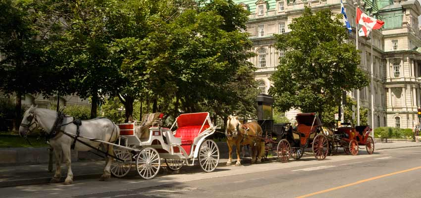 Horse-drawn carriage tours of Montreal