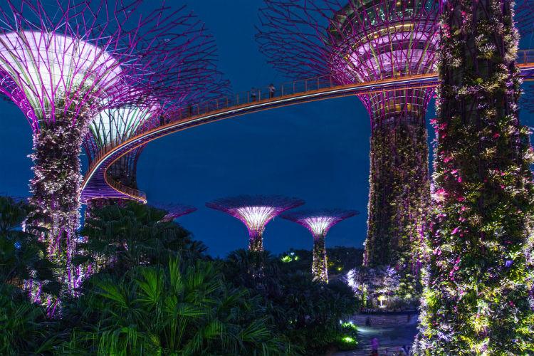 Trees in Singapore - Asia