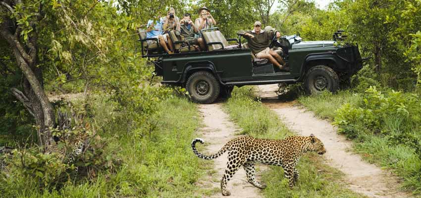 Safari adventures ashore in South Africa