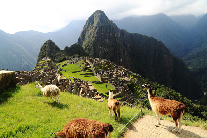 Llamas standing in front of Machu Picchu on a cruise excursion