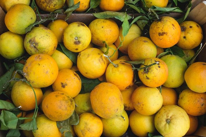 Pile of freshly-picked lemons in Sorrento