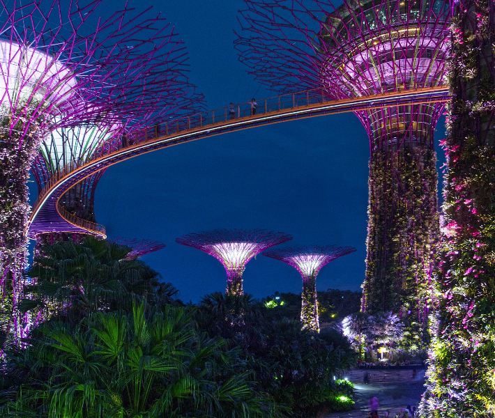 The Supertrees at Gardens by the Bay in Singapore at night
