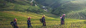 Local farmers walking through a rice field in Malaysia