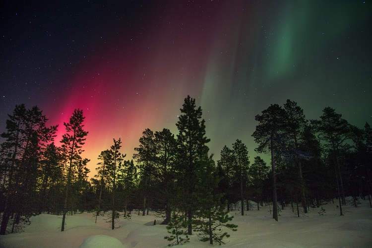Pink Northern Lights shining above trees in Finland