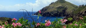 Flowers and lush grasses on a mountain in Saba in the Caribbean