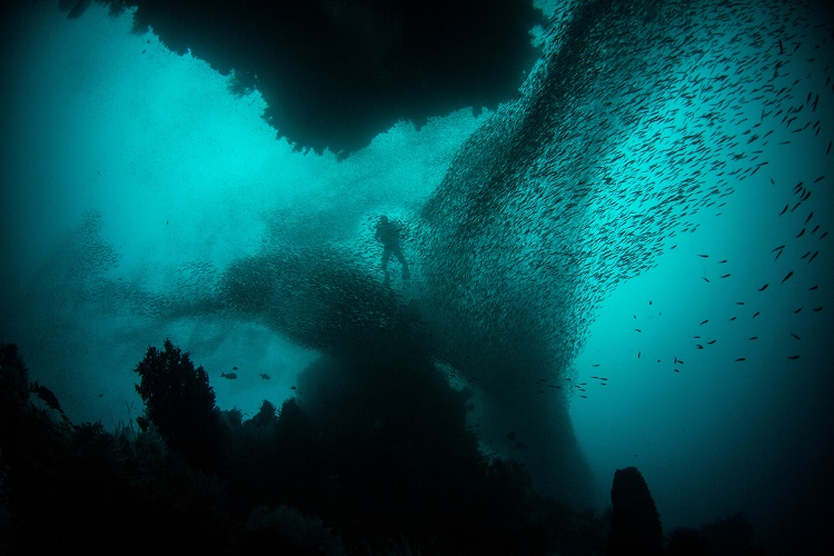 A visitor to Indonesia diving off Raja Ampat surrounded by a school of fish
