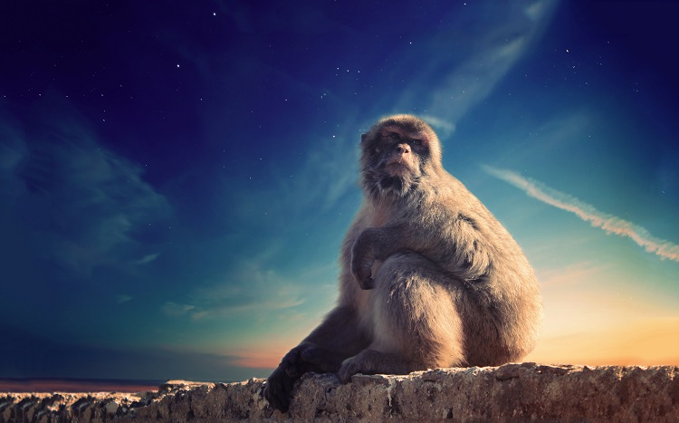 A monkey sitting on a wall on The Rock in Gibraltar at dusk