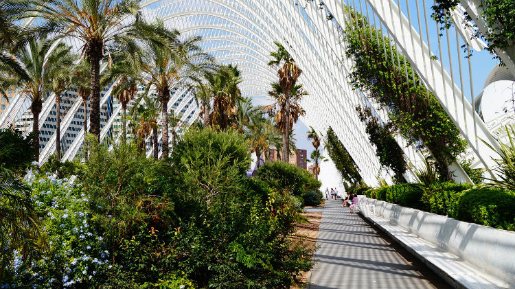 A botanic garden in the City of Arts and Sciences complex in Valencia