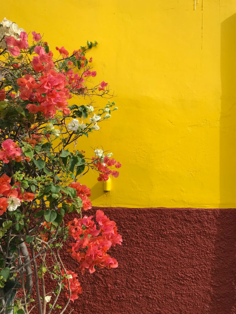 Pink flowers against a colourful red and yellow wall in Funchal in Madeira