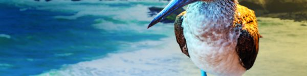 Galapagos: The ultimate bucket list cruise destination