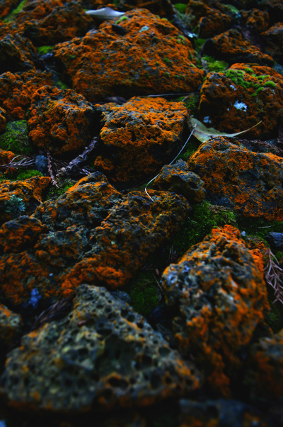 Rust-coloured moss on volcanic rocks on one of the islands in the Azores