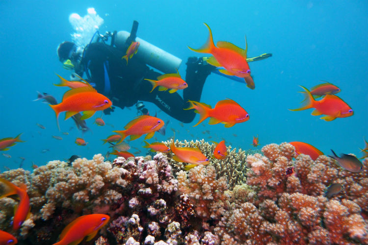 Scuba diving in the Caribbean
