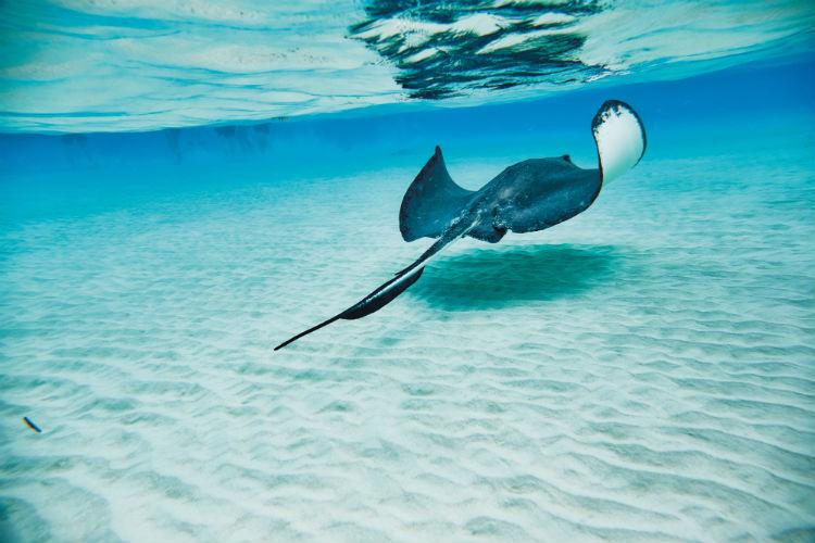 Stingray encounter - Princess Cays