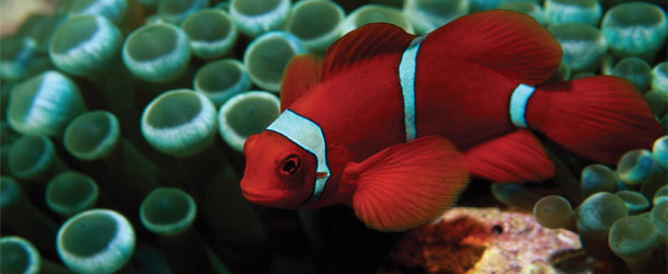 Aquarium cruise excursions