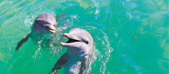 Sea life cruises
