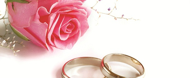 Close-up of a pink rose and two wedding rings