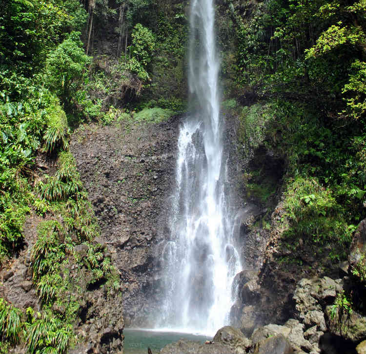 Dominica - National Park - Nature Trail